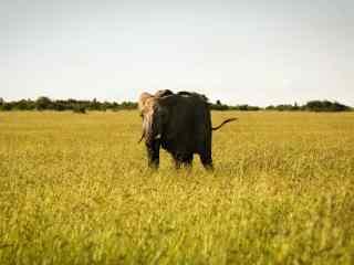唯美草原上的非洲