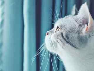 小猫咪完美侧脸图