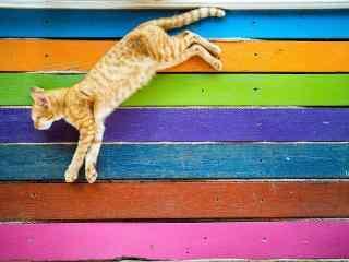 彩色背景中的小猫
