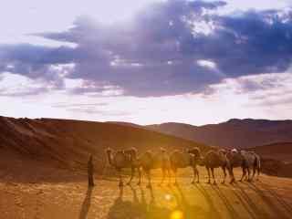 灿烂阳光下的骆驼队伍