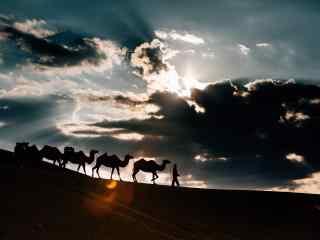 行走在沙漠之上的骆驼