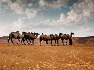 沙漠中的骆驼队伍