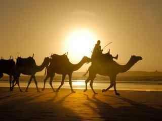 沙漠之中的骆驼图片壁纸