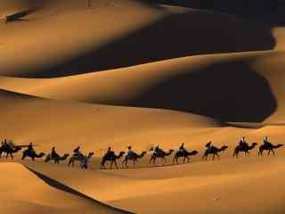 广阔沙漠中的骆驼图片