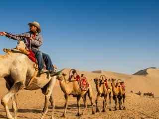 沙漠中的骆驼队图片