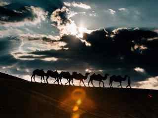 沙漠之上的骆驼队伍