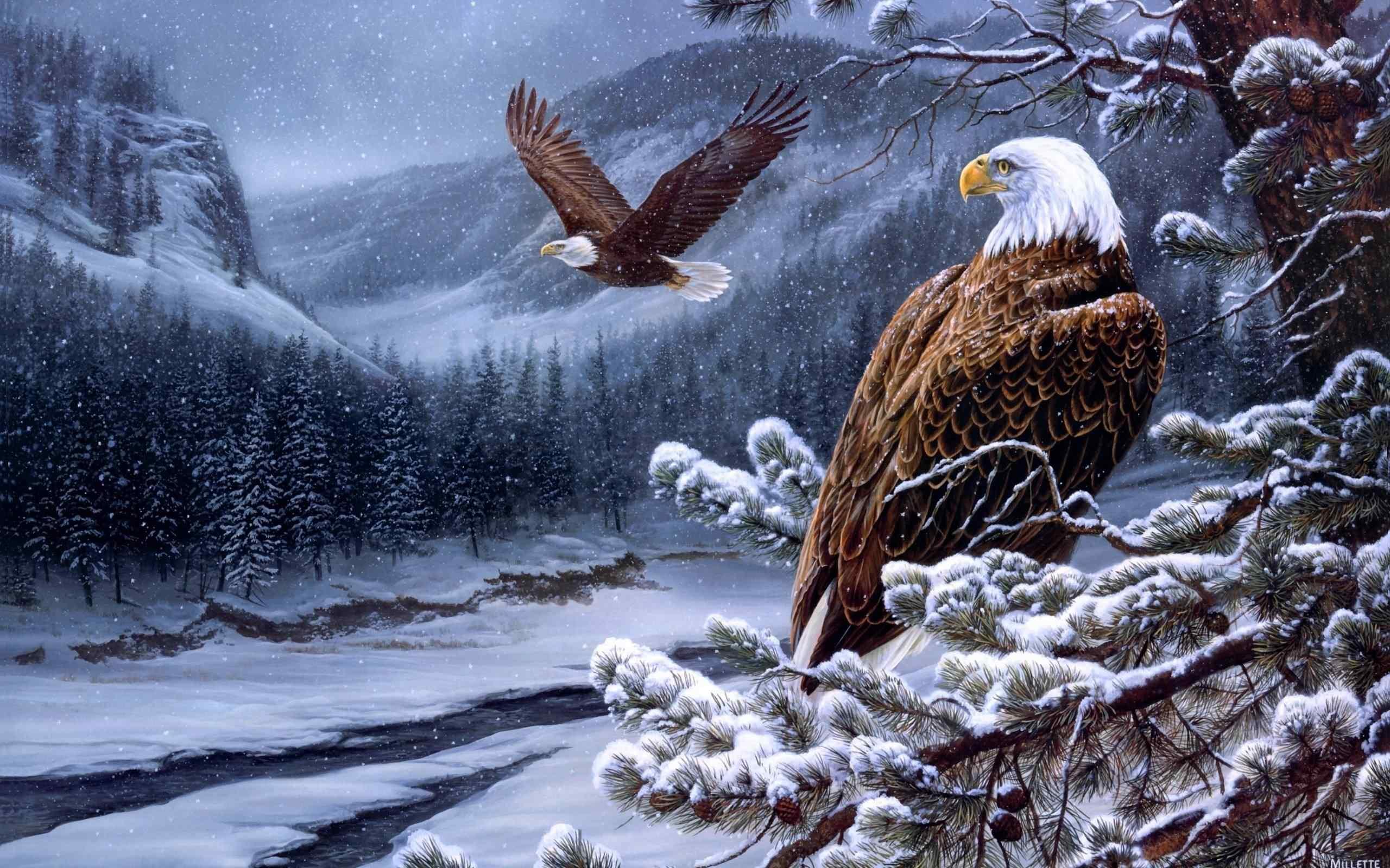 雪山森林里的老鹰图片桌面壁纸