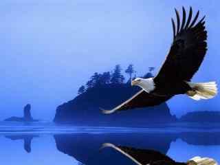 翱翔山水间的老鹰