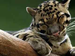 可爱的小老虎图片高清桌面壁纸