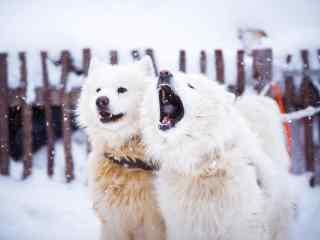 在雪中玩耍的小狗