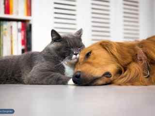 猫咪和小狗一起睡