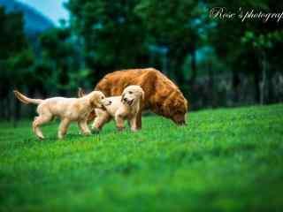 草坪上溜达的三只