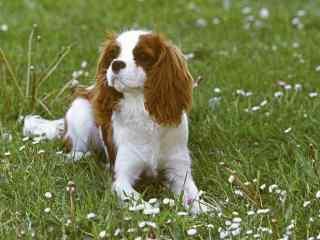 草地上的狗狗桌面壁纸