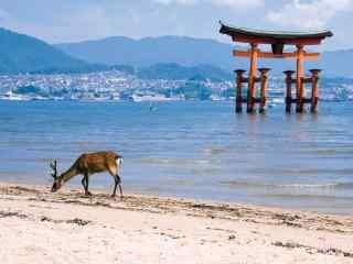 奈良鹿—在海边散步的小鹿桌面壁纸
