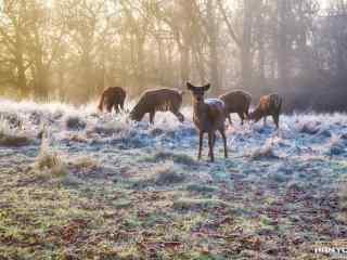 奈良鹿—草地上一群麋鹿桌面壁纸