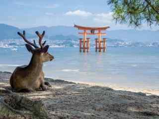 奈良鹿—在海边看风景的小鹿桌面壁纸