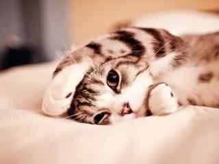 可爱的小猫咪伸懒