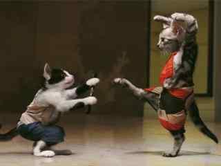 两只小猫咪搞笑打