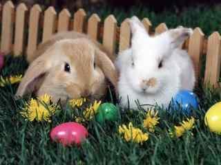 两只呆萌的小兔子