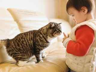 小男孩逗小猫咪玩