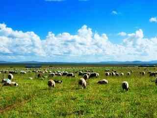 青青草原与可爱羊群图片