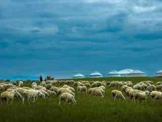 绿色草原上的羊群桌面壁纸