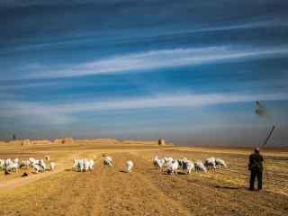 枯黄的草原地上的羊群壁纸