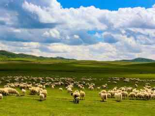 广袤的大草原上的羊群壁纸