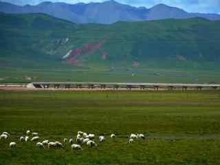 绿色大草原上的羊群桌面壁纸