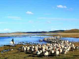 草原上的羊群图片壁纸