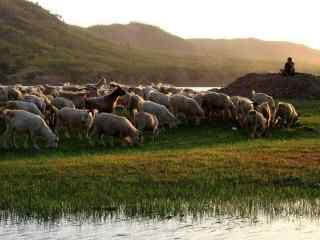 草原羊群图片壁纸