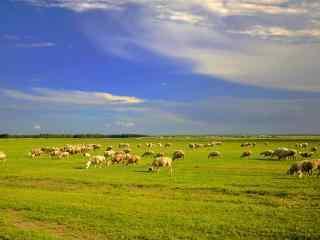 绿色清新的草原地羊群图片壁纸