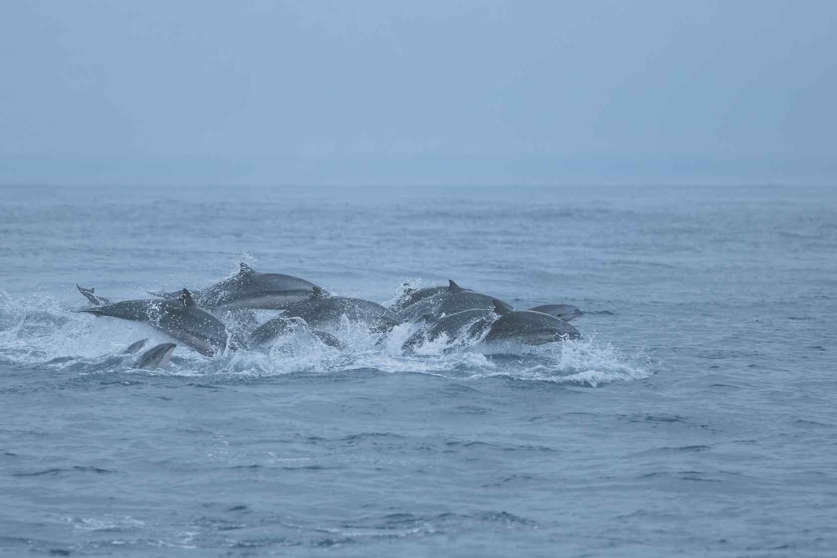 海豚们在水面上飞跃桌面壁纸