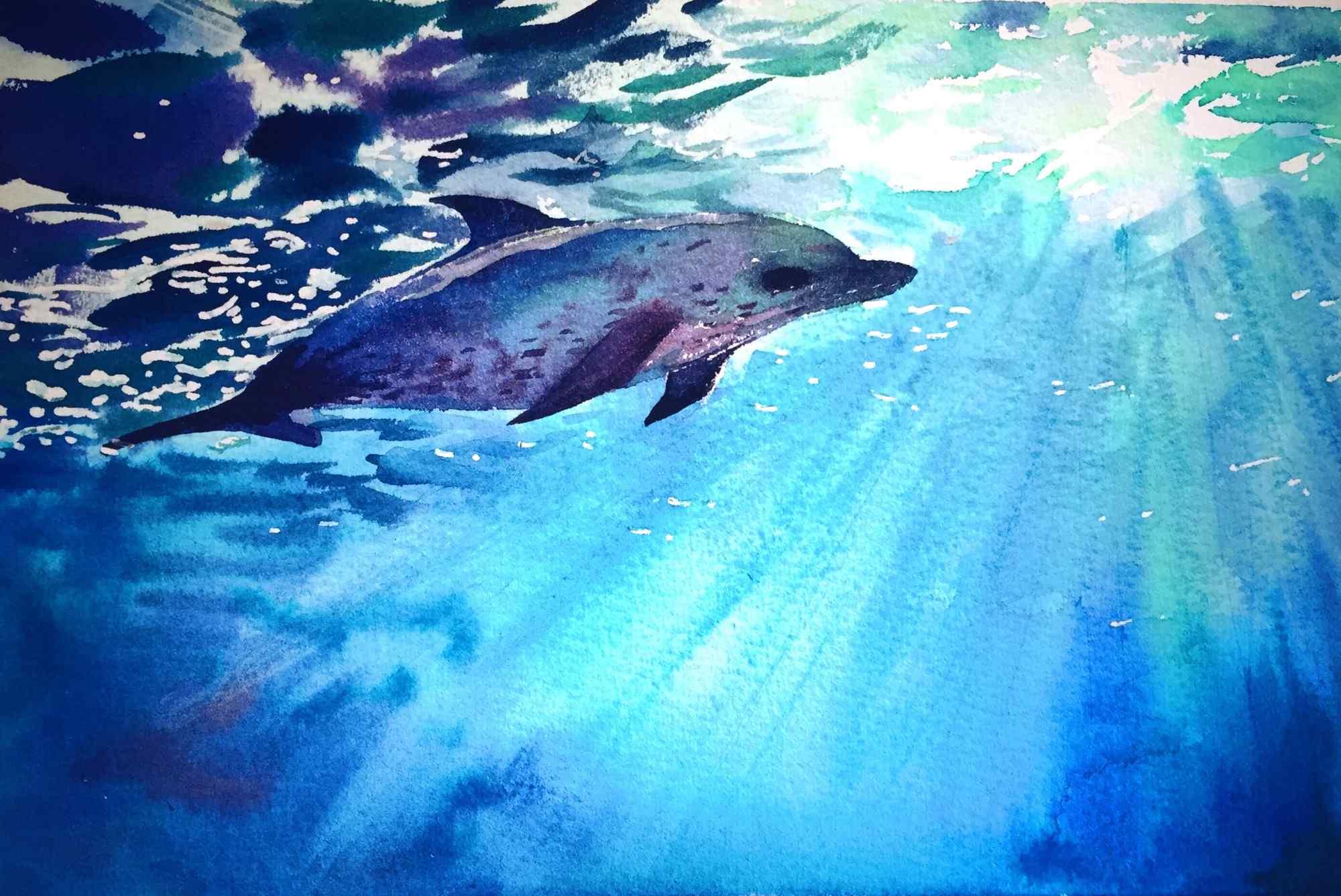 手绘可爱的海豚桌面壁纸