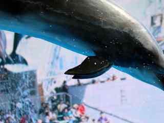 从空中飞跃而过的海豚桌面壁纸