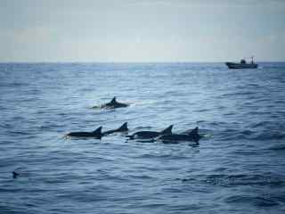 小清新海洋里的海豚桌面壁纸