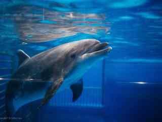 进入睡眠的海豚桌面壁纸