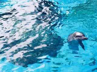 水中探出小脑袋的海豚桌面壁纸