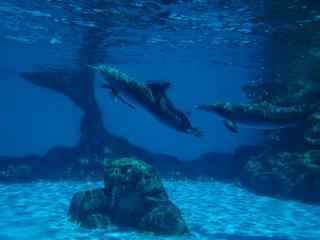 在水中嬉闹的的海豚桌面壁纸