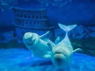 水族馆里两只搞怪的海豚桌面壁纸