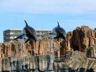 飞跃上空的海豚桌面壁纸
