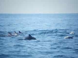 唯美海洋里的海豚桌面壁纸