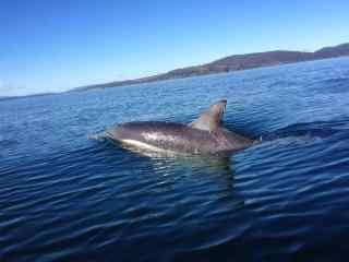 海洋里准备跳舞的海豚桌面壁纸
