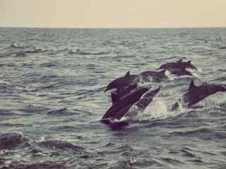 在海绵旋转的海豚桌面壁纸