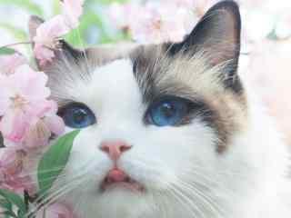 花丛间可爱的布偶