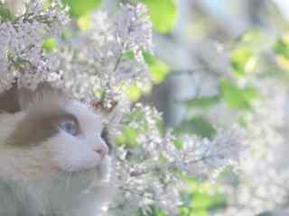 唯美好看的布偶猫