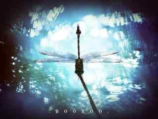 唯美的蜻蜓逆光摄影桌面壁纸