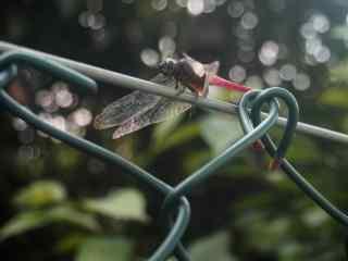 文艺的红蜻蜓高清桌面壁纸