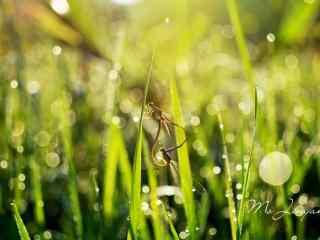 草丛中的小蜻蜓桌面壁纸