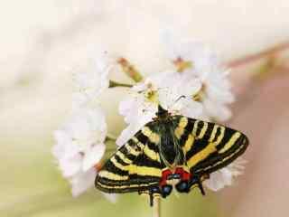 美丽鲜花上的凤蝶桌面壁纸